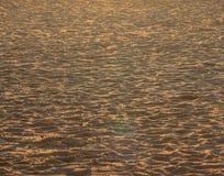 Het zand op het strand in Oostende, door de zonsondergang wordt verguld die stock fotografie