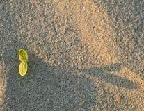 Het zand van de spruit Royalty-vrije Stock Afbeeldingen