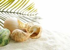 Het zand van het strand en zeeschelpen, conceptenvakantie Stock Foto's
