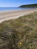 Het zand van Saunton Royalty-vrije Stock Foto's
