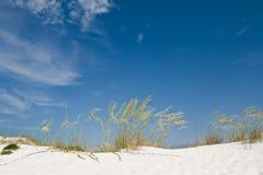 Het zandduin van het strand met grassen en riet Stock Foto