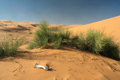 Het zandduinen van Chebbi van de erg Stock Foto's