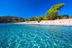 Het zandige strand van Santa Giulia met pijnboombomen en azuurblauw duidelijk water, Corsica, Frankrijk royalty-vrije stock afbeeldingen