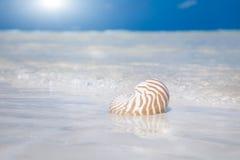Het zandzon en oceaan van de zeeschelp Stock Foto