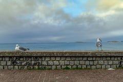 Het zeemeeuwpaar in Baiona Stock Fotografie