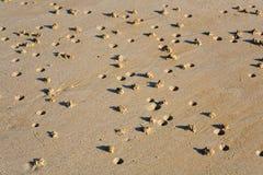 Het zeepier (arenicolajachthaven) giet op een strand Stock Foto's