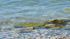 Het zeewater wast kiezelstenen op het strandclose-up stock footage