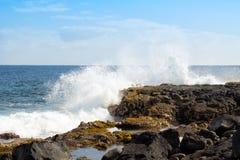 Het zeewier groeit in plons gevoede getijdepool Royalty-vrije Stock Foto