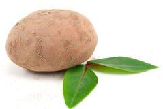 Het zijaanzicht van Eco potatoe Stock Foto's