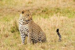 Het zijaanzicht van het luipaardclose-up Stock Foto's