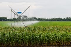 Het zijsysteem van de bewegingsirrigatie op cornfield stock fotografie