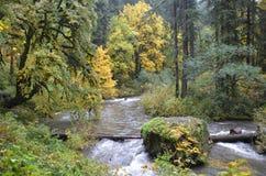 Het zilver valt het park van de staat, Oregon stock foto