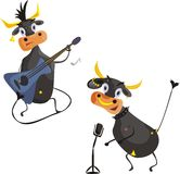 Het zingen Koeien Stock Foto's