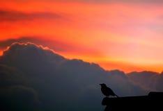 Het zingen van de vogel stock afbeeldingen