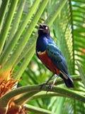 Het zingen van de vogel in een palm Stock Fotografie