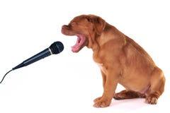 Het Zingen van het puppy Stock Foto's