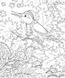 Het zingen vogel in een de herfstbos Stock Afbeelding