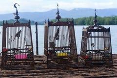 Het zingen vogel in een kooi Stock Afbeeldingen