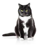 Het zitten van zwarte kat met gele ogen Royalty-vrije Stock Foto's