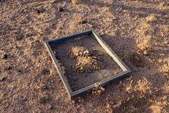 Het zoeken naar rotsen in de woestijn van Arizona stock foto's