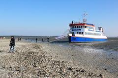Het zoeken van planken op zandbank in Waddensea, Holland Royalty-vrije Stock Afbeeldingen
