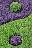 Het zoemen in Taiji Royalty-vrije Stock Afbeelding