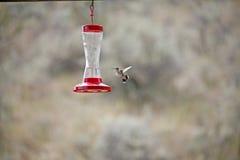 Het zoemen vogelmening Stock Afbeeldingen