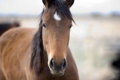 Het zoete Gezicht van het Paard Royalty-vrije Stock Afbeeldingen