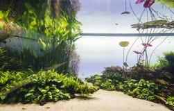 Het zoetwateraquarium van de aard in de stijl van Takasi Amano Royalty-vrije Stock Foto