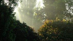 Het zonlicht dat onderbrekingen door het groene struikgewas royalty-vrije stock foto's