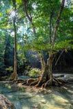 Het zonlicht door bomen maakt het duidelijke water van het Nationale park van Erawan in Thailand gloeien en de boomwortels benadr royalty-vrije stock afbeeldingen