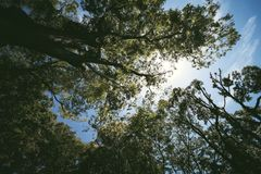 Het zonlicht en de grote bomen royalty-vrije stock afbeelding