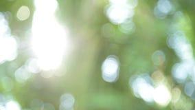 Het zonlicht glanst door de bladeren uit nadruk stock footage