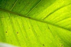 Het zonlicht glanst door groene bladeren royalty-vrije stock afbeelding