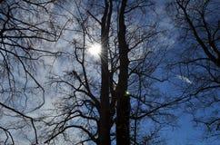 Het zonlicht glanst door takken van bomen op een mooie dag royalty-vrije stock afbeelding