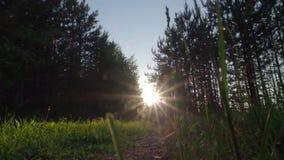Het zonlicht komt door bladeren bij zonsondergang stock footage