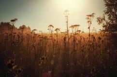 Het zonlicht op gebied Stock Foto