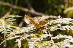 Het zonlicht schetst de vleugels van een vlinder stock afbeelding