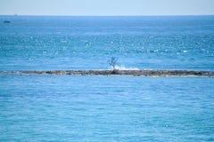 Het zonlicht schittert op de Atlantische Oceaan in de Sleutels van Florida met medio dagzon die op water glimmen Stock Fotografie