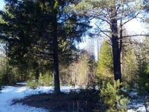 Het zonlicht van de ochtend in het bos Stock Fotografie