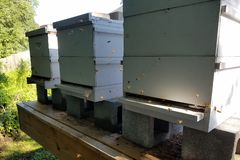 Het zonlicht verlicht Vliegend Honey Bees At Bee Hives royalty-vrije stock fotografie