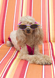 Het zonnebaden Royalty-vrije Stock Foto