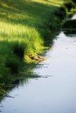 Het zonnebaden van schildpadden Stock Fotografie