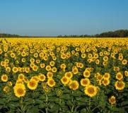 Het zonnegebied. Stock Fotografie