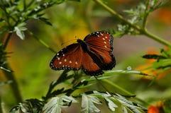 Het zonnen van de vlinder Royalty-vrije Stock Foto's