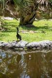 Het zonnen van vogel Royalty-vrije Stock Afbeelding