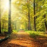 Het zonnige Bos van de Herfst Stock Afbeelding