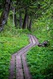 het zonnige de zomer voetpad van de wandelingssleep in het hout voor toeristen royalty-vrije stock afbeeldingen