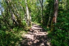 het zonnige de zomer voetpad van de wandelingssleep in het hout voor toeristen stock foto's