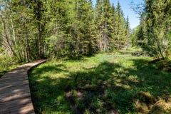 het zonnige de zomer voetpad van de wandelingssleep in het hout voor toeristen stock afbeelding